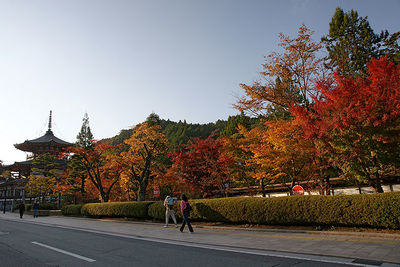 Mount Koya attractions and access