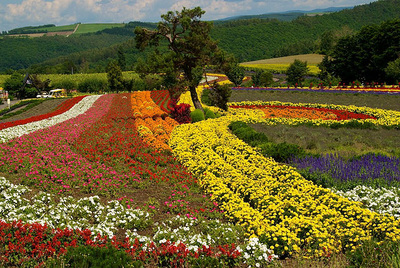 Furano Region in Hokkaido and its attractions